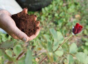 Bahçede ve Evde Kahve Kullanmanın Faydaları 7