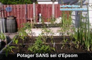 Bahçede Neden Epsom Tuzu Kullanmalıyız? 10