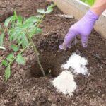 Bahçede Neden Epsom Tuzu Kullanmalıyız? 12