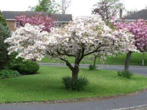 Bahçede Neden Epsom Tuzu Kullanmalıyız? 1