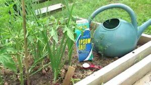 Bahçede Neden Epsom Tuzu Kullanmalıyız? 2