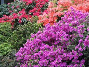 Bahçede Neden Epsom Tuzu Kullanmalıyız? 6
