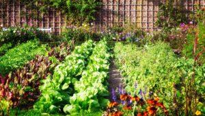 Bahçede Sebze Yetiştirmenin Püf Noktaları 9