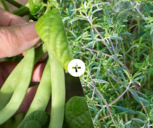 Bahçede Sebze Yetiştirmenin Püf Noktaları 11