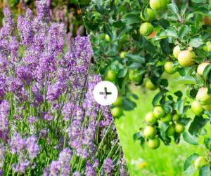 Bahçede Sebze Yetiştirmenin Püf Noktaları 12