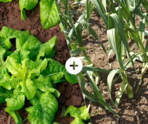 Bahçede Sebze Yetiştirmenin Püf Noktaları 14