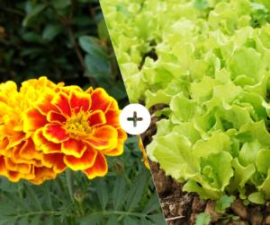 Bahçede Sebze Yetiştirmenin Püf Noktaları 15