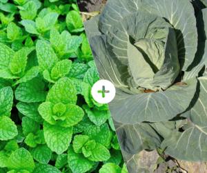 Bahçede Sebze Yetiştirmenin Püf Noktaları 16