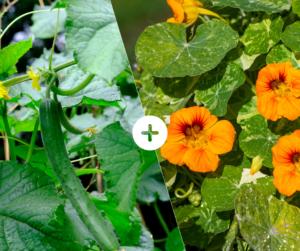 Bahçede Sebze Yetiştirmenin Püf Noktaları 17