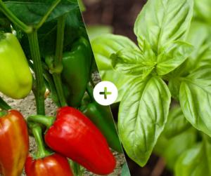 Bahçede Sebze Yetiştirmenin Püf Noktaları 18
