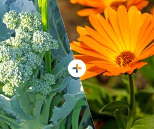 Bahçede Sebze Yetiştirmenin Püf Noktaları 1