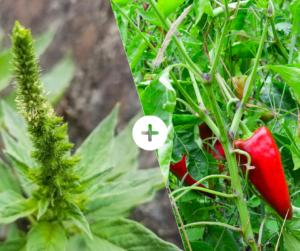 Bahçede Sebze Yetiştirmenin Püf Noktaları 19