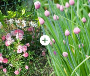 Bahçede Sebze Yetiştirmenin Püf Noktaları 21