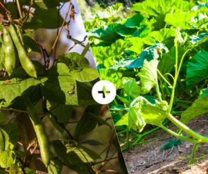 Bahçede Sebze Yetiştirmenin Püf Noktaları 25