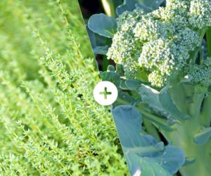 Bahçede Sebze Yetiştirmenin Püf Noktaları 26