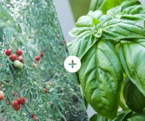 Bahçede Sebze Yetiştirmenin Püf Noktaları 27
