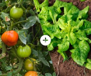 Bahçede Sebze Yetiştirmenin Püf Noktaları 28