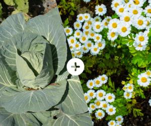 Bahçede Sebze Yetiştirmenin Püf Noktaları 2