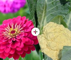 Bahçede Sebze Yetiştirmenin Püf Noktaları 29