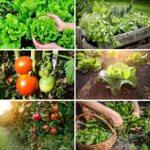 Bahçede Sebze Yetiştirmenin Püf Noktaları