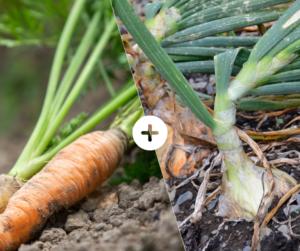 Bahçede Sebze Yetiştirmenin Püf Noktaları 3