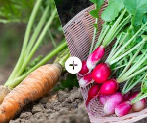 Bahçede Sebze Yetiştirmenin Püf Noktaları 4