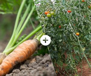 Bahçede Sebze Yetiştirmenin Püf Noktaları 5