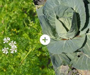 Bahçede Sebze Yetiştirmenin Püf Noktaları 6