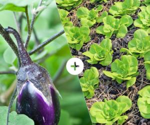 Bahçede Sebze Yetiştirmenin Püf Noktaları 7