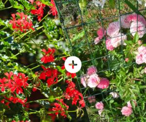 Bahçede Sebze Yetiştirmenin Püf Noktaları 8